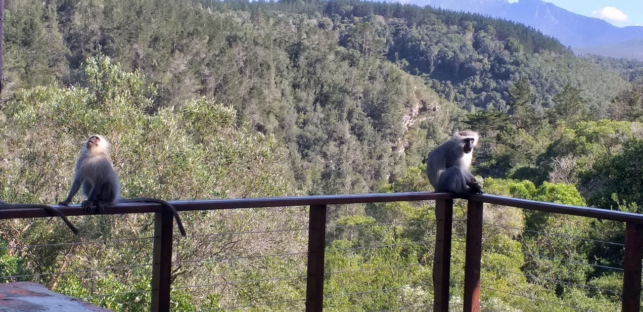 """""""BE-ing"""" with Baboons and other wild neighbours"""