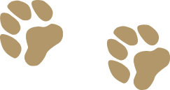 Communicate with Animals easily - Learn animal communication online
