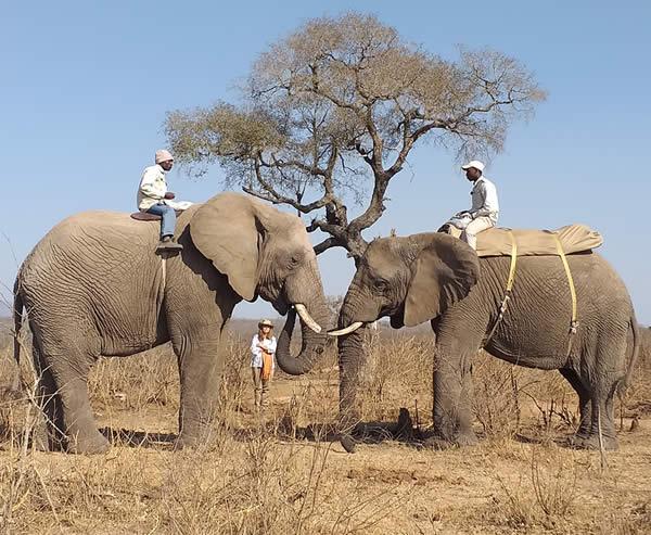 I am Elephant & animal communicator Wynter Worsthorne