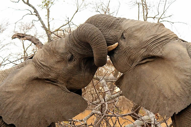 FREE Webinar – H.E.A.R.T. for Elephants