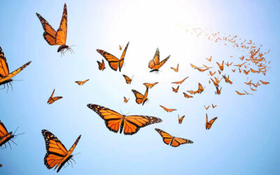 FREE Webinar – Messages from Nature