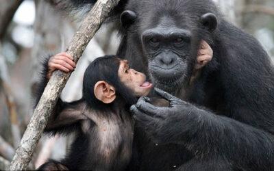 FREE Webinar – H.E.A.R.T. Gathering for Primates