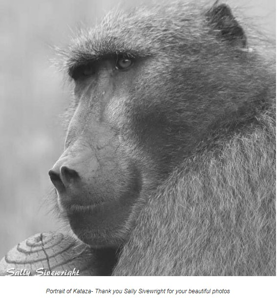 Meditation & Blessing Ceremony for Baboons