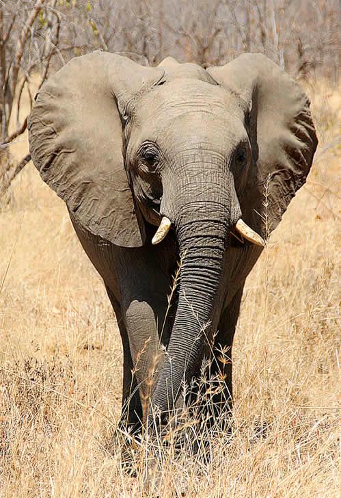 African wildlife - Elephant Reintegration Trust