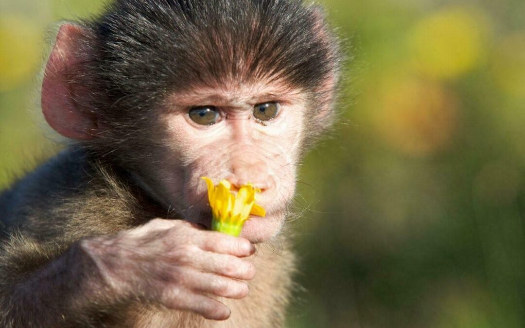 FREE H.E.A.R.T. webinar for Baboons with Wynter