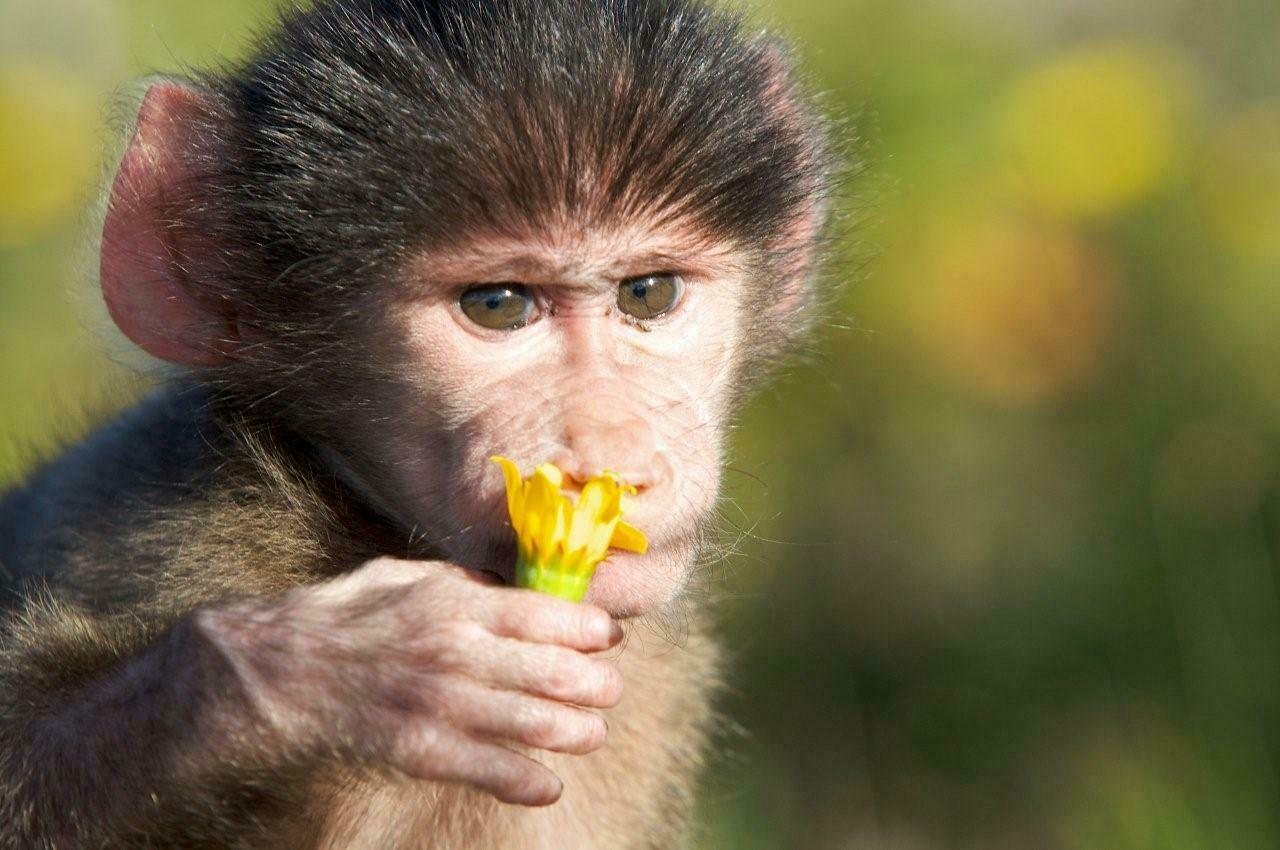 April - FREE H.E.A.R.T. webinar for Baboons with Wynter