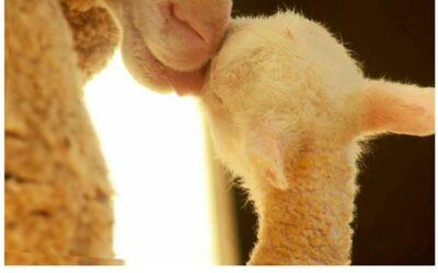 H.E.A.R.T. for Farm Animals